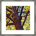 What Are You Lookin At Framed Print