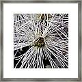 White Flora Framed Print
