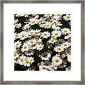White Summer Daisies Framed Print