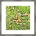 Wild Flowers Framed Print