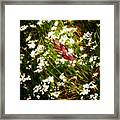Wild Flowers Framed Print by Stelios Kleanthous