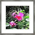 Wild Irish Rose Framed Print