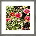 Wild Pink Beauty  Framed Print