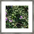 Wild Rose Habitat Framed Print