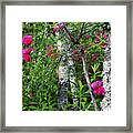 Wild Rose In Sumac Framed Print