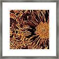 Wild Sunflower Abstract Framed Print