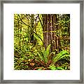 Wild Wonder In The Woods Framed Print