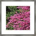 Fuji Velvia 50 Framed Print