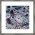 Winter Feast Framed Print