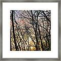 Winter's Delight Framed Print