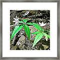 Woodland Flowers Framed Print