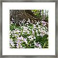 Woodlands Spring Beauty Framed Print