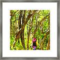 Woods Walk Framed Print