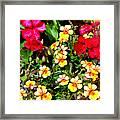 Wp Floral Study 1 2014 Framed Print
