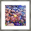 Yachats Oregon - Low Tide Treasures Framed Print