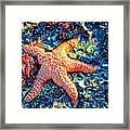 Yachats Oregon - Sea Star Framed Print