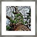 Ye Ole Tree At Chichen Itza Framed Print
