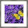 Yellow Butterfly On Mee Framed Print