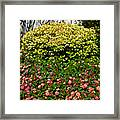 Yellow Coleus And Lantana At Pilgrim Place In Claremont-california Framed Print
