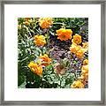 Yellow Flowers Bushes Framed Print