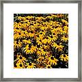 Yellow Is The Color Of ..... Framed Print