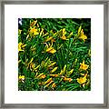 Yellow Lily Flowers Framed Print
