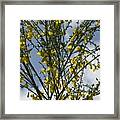 Yellow Little Flowers Framed Print