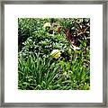 Yellow Peonia Framed Print