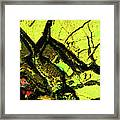 Yellow Sky With Dead Cedar Framed Print