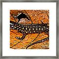 Yellow Spotted Tropical Night Lizard Framed Print