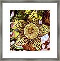 Your A Star In My Eyes Framed Print
