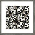 Zebra IIi Framed Print