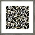 Zebra Vii Framed Print