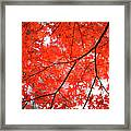 Fall Colors In Japan Framed Print