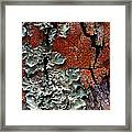 Lichen On Tree Bark Framed Print