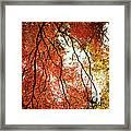Fall Colors In Japan Framed Print