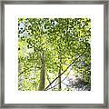 Alpine Glow Framed Print