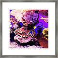 Aquarium Fish Framed Print