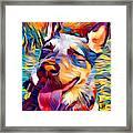 Australian Cattle Dog 2 Framed Print