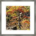 Autumn Color In Smoky Mountains National Park Framed Print