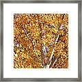 Autumn Golden Leaves Framed Print