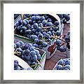 Baskets Of Grapes Framed Print