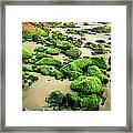Beach Rocks Covered With Seaweed Framed Print