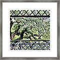 Bridge Through Live Oaks Framed Print