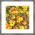 California Poppies - 2019 #3 Framed Print
