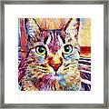 Cat 13 Framed Print