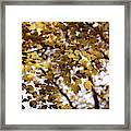 Cozy Fall Day Framed Print