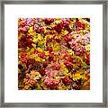 Days Of Autumn 18 Framed Print