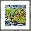 Emerald Tree Framed Print