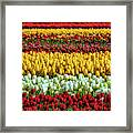 Endless Beautiful Tulip Fields Framed Print